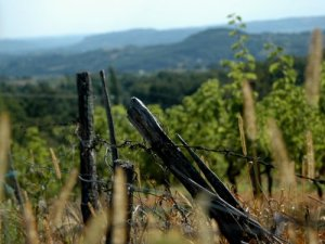 fences of correze 8