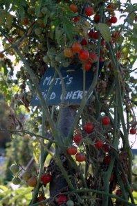 fete de tomate 15