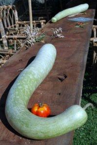 fete de tomate 16