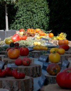 fete de tomate 24 9-13-2009 12-23-49 PM