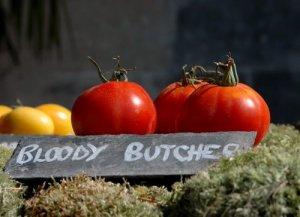 fete de tomate 28