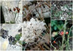 garden in February-dry flowerheads