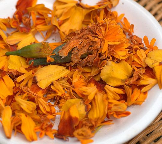 …marigold(souci)… …clover(trefle)…