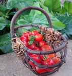 cherry tomatoes for sucettes