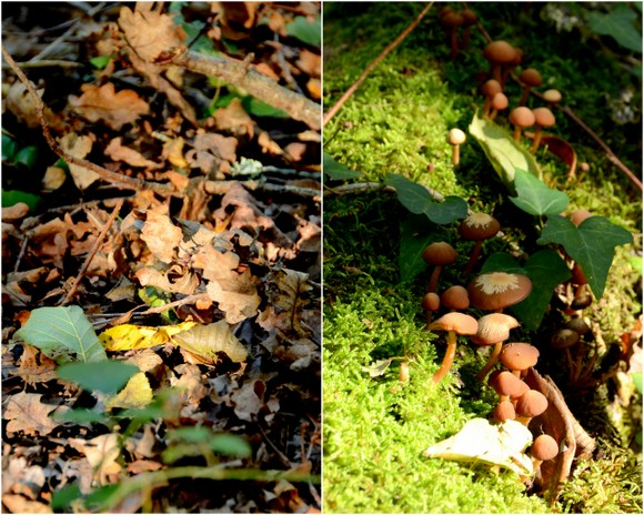 Autumn gives us siennas coillage 3
