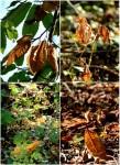 Autumn gives us siennas collage