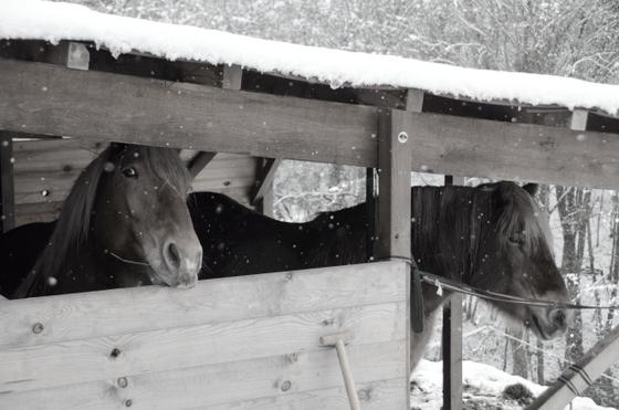 neige 2013-027