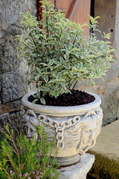 les fleurs sur la terrasse 3264x4928