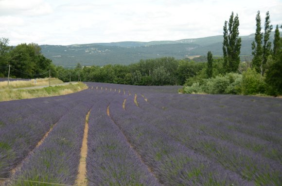 Provence 2013 28-06-2013 13-31-25 4928x3264