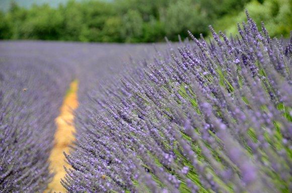 Provence 2013 28-06-2013 13-33-13 4928x3264