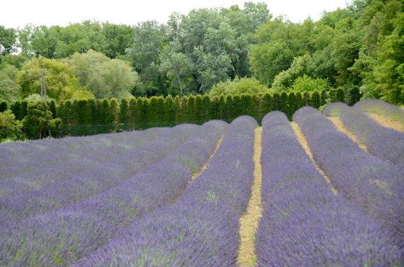 Provence 2013 28-06-2013 13-44-51 4928x3264