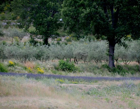 Provence 2013 28-06-2013 14-27-43 4198x3244