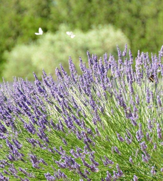 Provence 2013 29-06-2013 10-52-27 2751x3051