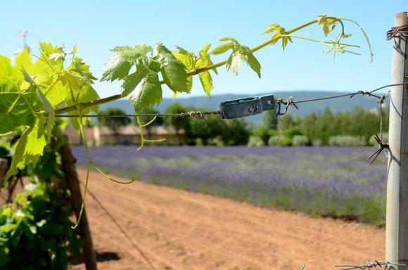 Provence 2013 29-06-2013 10-53-40 4928x3264