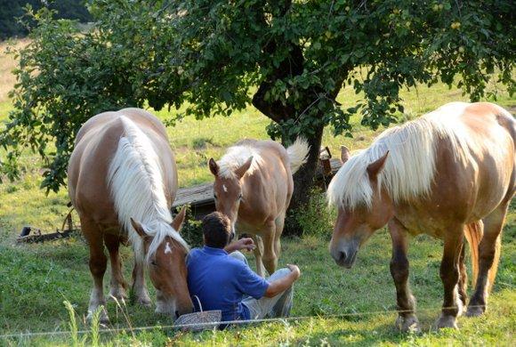 horses 14 28-08-2013 19-13-39 4801x3228