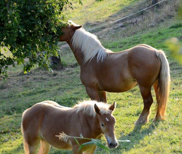 horses 20 28-08-2013 19-17-26 3923x3127