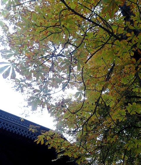 Paris jardin du Luxembourg 09-10-2013 10-36-20 1385x1616