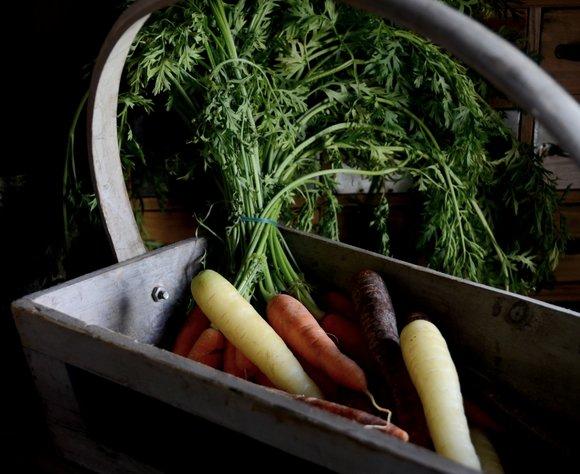 rainbow carrots 28-10-2013 12-24-13 3963x3234