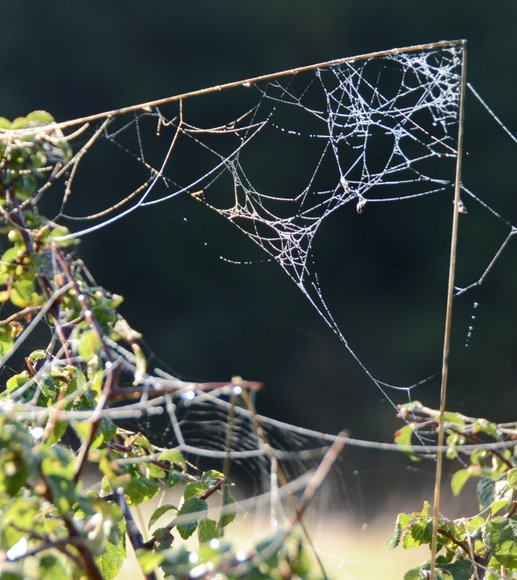 spiderwebs of automne 21-09-2013 09-44-50 2568x2883