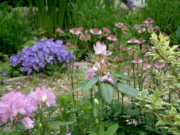 garden 2008 2048x1536-004