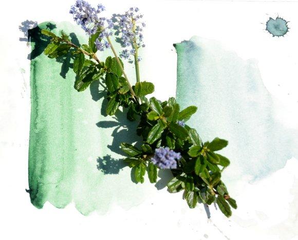 spring greens. 3553x2858