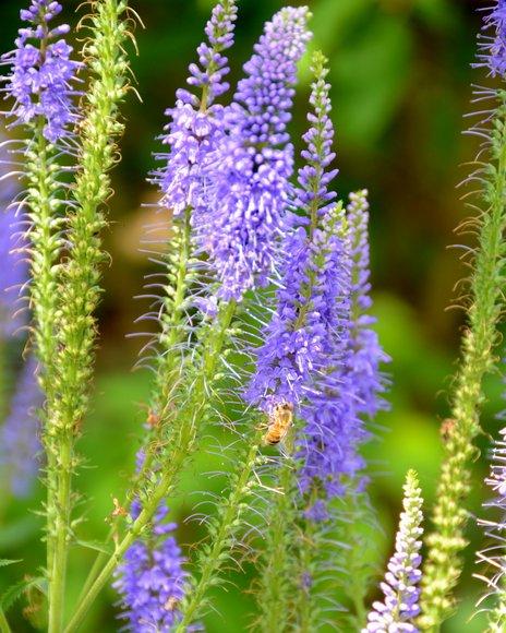 les jardins de Colette 3120x3903
