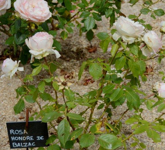 les jardins de Colette 3547x3223