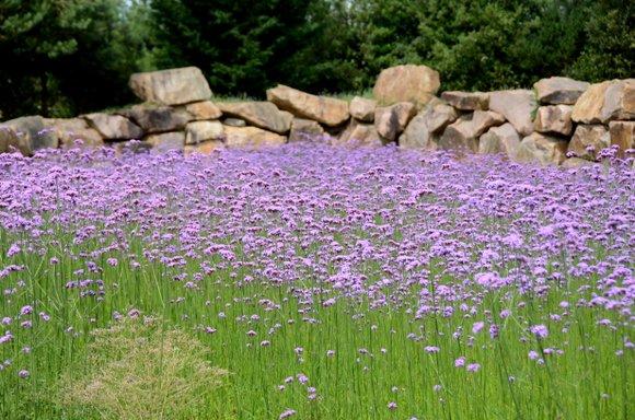 les jardins de Colette 4928x3264-005