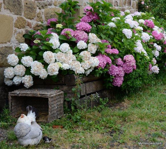 jardin juillet 2014 3507x3147