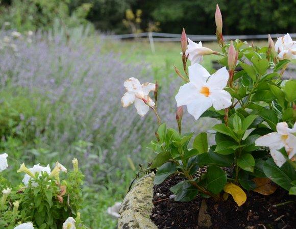 Jardin Juillet 2014 4162x3218