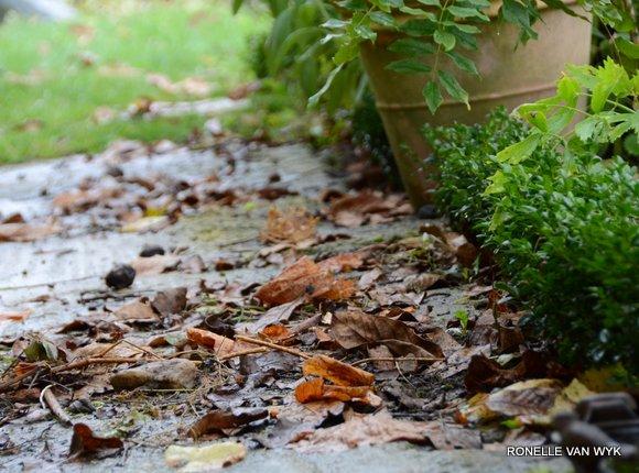 October scenes 4381x3248