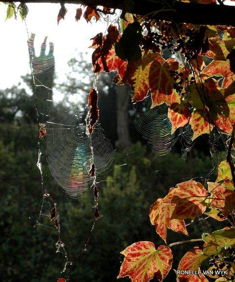 ronelle's photography- autumn light