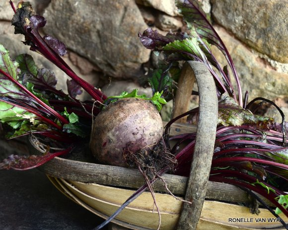 Ronelle's photography-beetroot-001