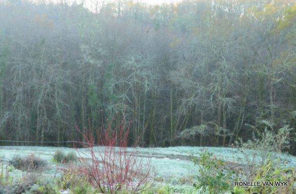 Jack Frost Decembre-001
