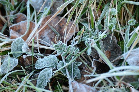 Jack Frost Decembre-003