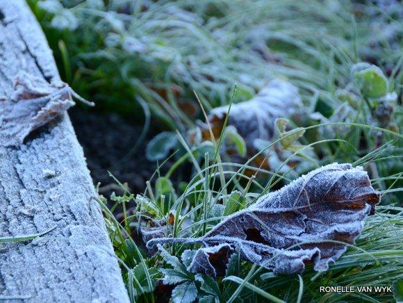 Jack Frost Decembre-004