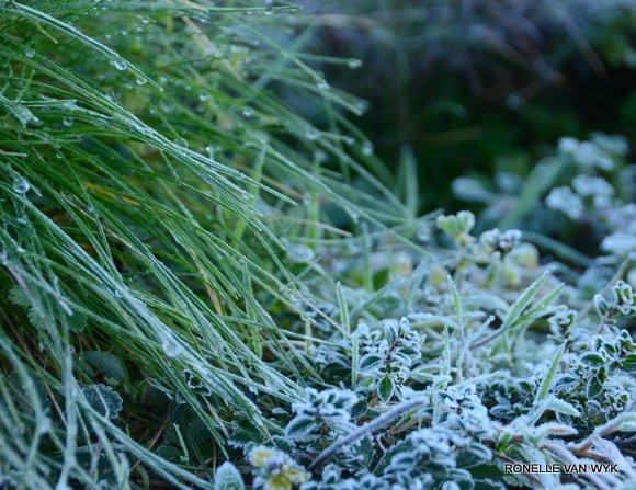 Jack Frost Decembre-005