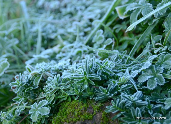 Jack Frost Decembre-006