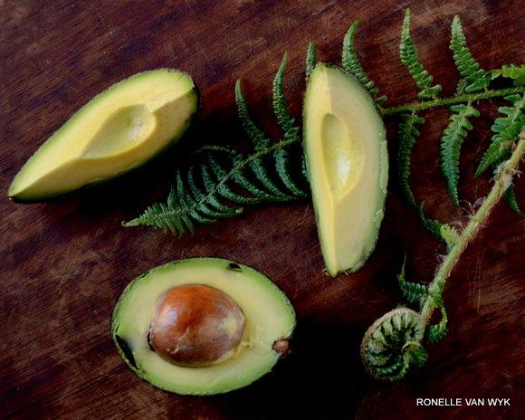avocado and fern-001