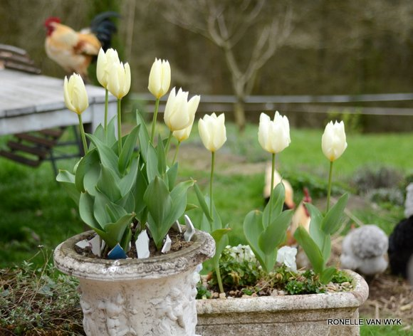 Tulips for Easter-009