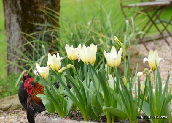 Tulips for Easter-011