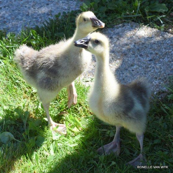 hansie & grietjie