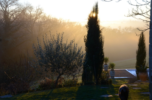 garden-in-january-018