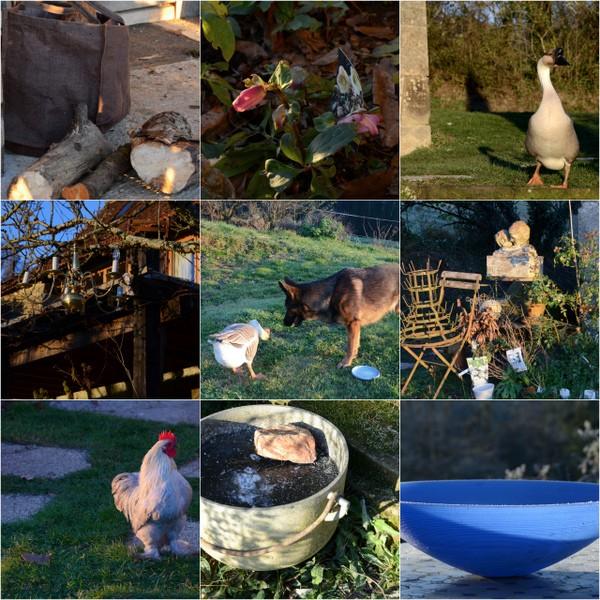 garden-in-january-2017